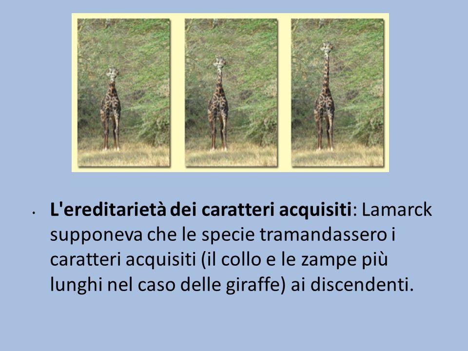 L'ereditarietà dei caratteri acquisiti: Lamarck supponeva che le specie tramandassero i caratteri acquisiti (il collo e le zampe più lunghi nel caso d