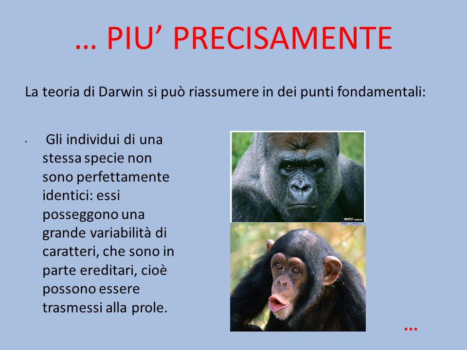 … PIU' PRECISAMENTE Gli individui di una stessa specie non sono perfettamente identici: essi posseggono una grande variabilità di caratteri, che sono