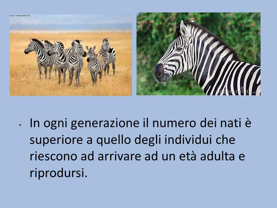 Con il passare delle generazioni le mutazioni possono accumularsi: alla fine la specie originaria subisce un cambiamento tale da poter essere considerata una nuova specie.