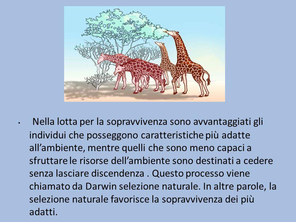 Lamarck pensava che … gli organismi, così come si presentavano, fossero il risultato di un processo graduale di modificazione che avveniva sotto la pressione delle condizioni ambientali.