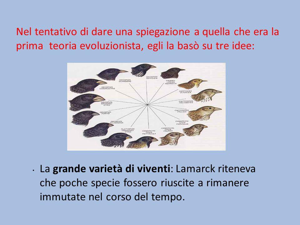 L uso e il non uso degli arti: secondo Lamarck, le specie avevano con il tempo sviluppato gli organi del loro corpo che permettevano di sopravvivere e di adattarsi all ambiente.