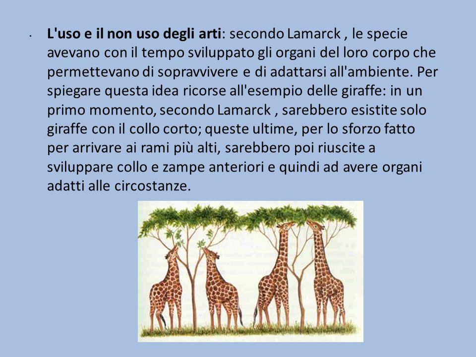 L ereditarietà dei caratteri acquisiti: Lamarck supponeva che le specie tramandassero i caratteri acquisiti (il collo e le zampe più lunghi nel caso delle giraffe) ai discendenti.