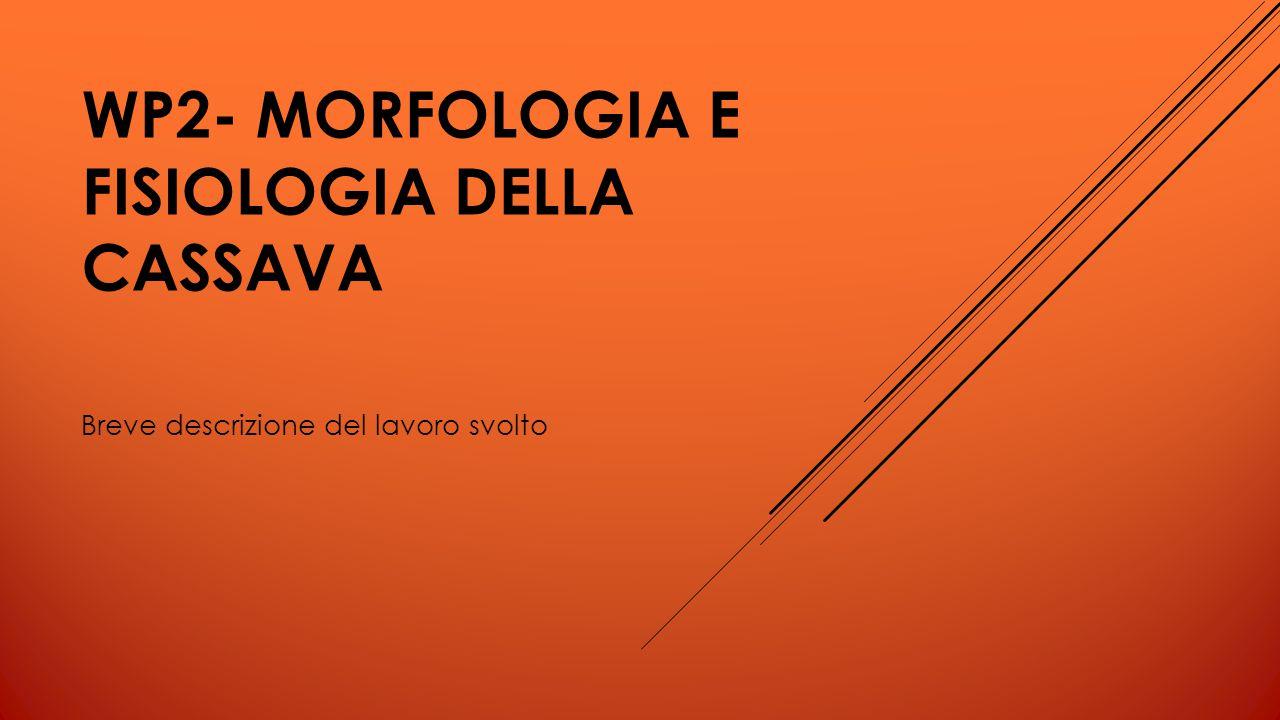 WP2- MORFOLOGIA E FISIOLOGIA DELLA CASSAVA Breve descrizione del lavoro svolto