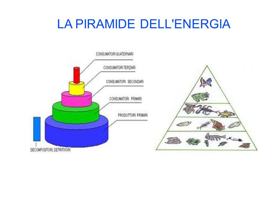 LA PIRAMIDE DELL'ENERGIA