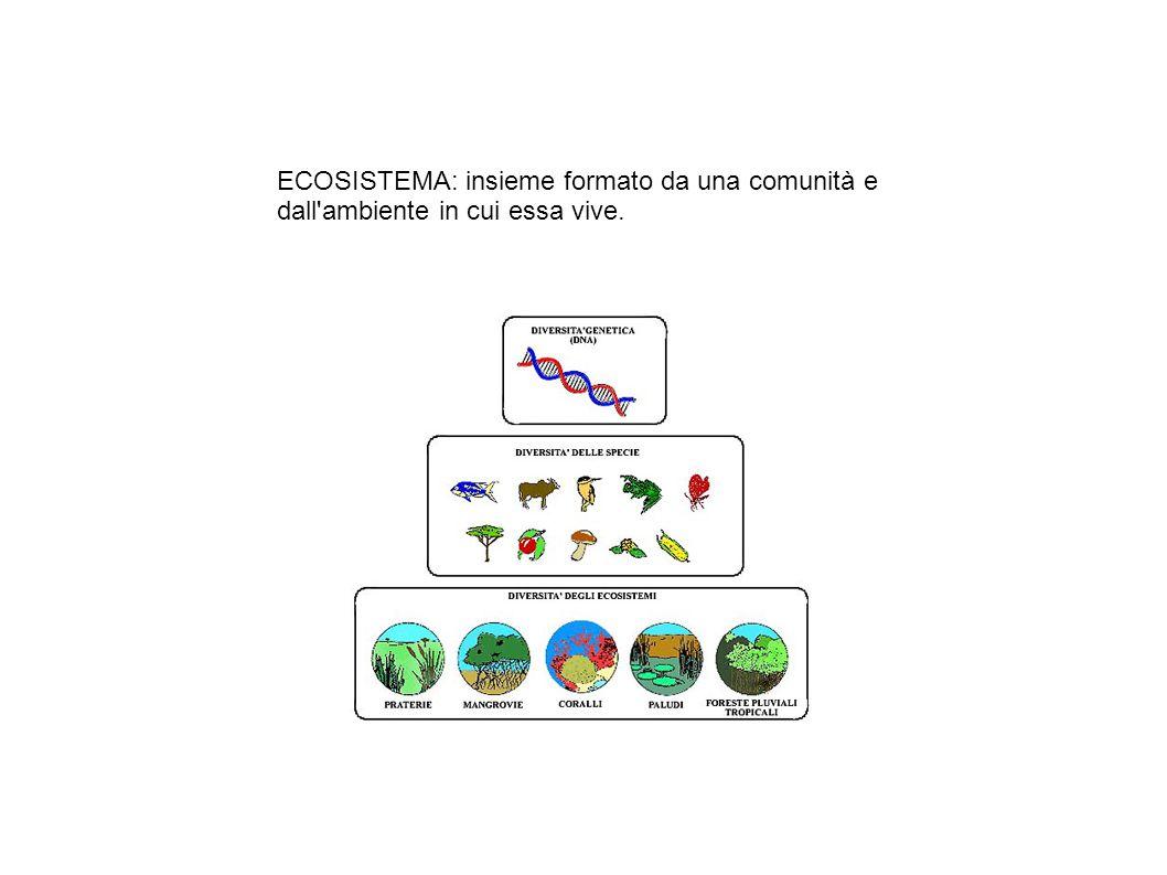 ECOSISTEMA: insieme formato da una comunità e dall'ambiente in cui essa vive.