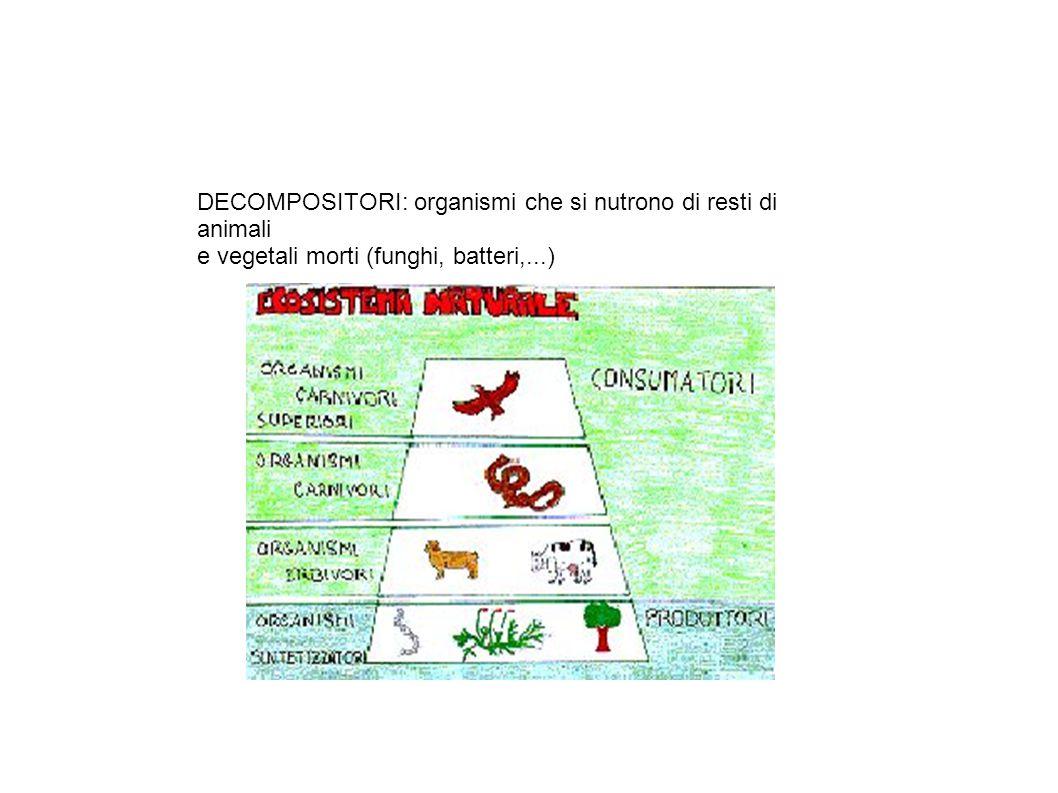 DECOMPOSITORI: organismi che si nutrono di resti di animali e vegetali morti (funghi, batteri,...)