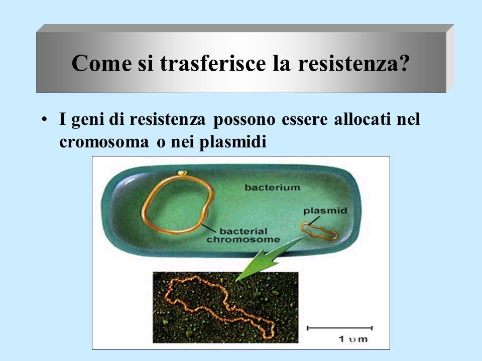 Meccanismi di trasferimento di geni