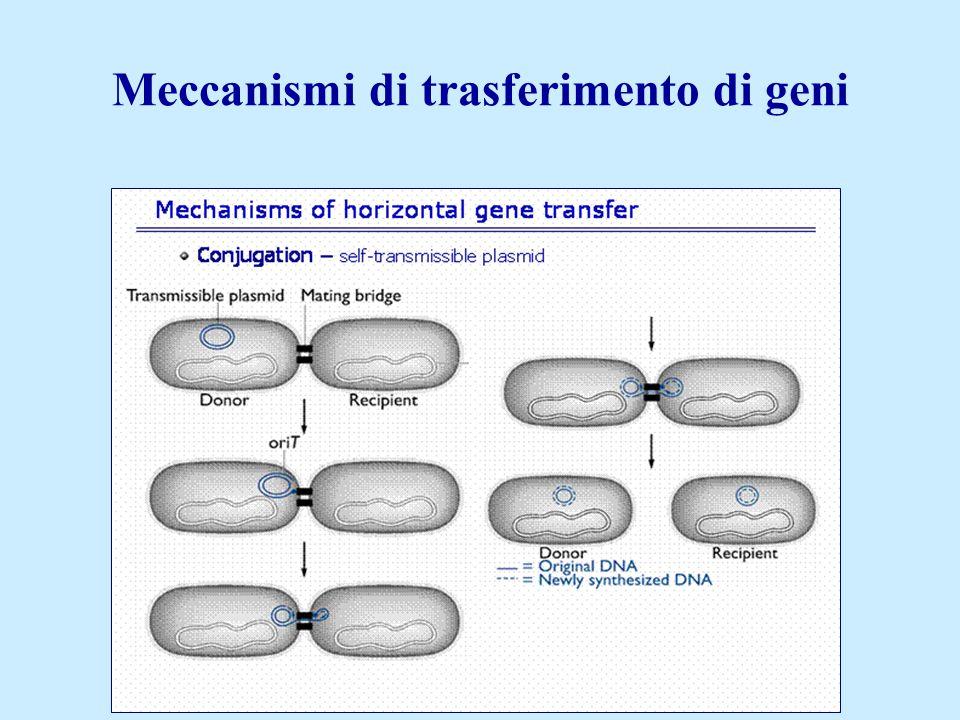 Il trasferimento di plasmidi comporta il passaggio di informazioni genetiche senza morte cellulare