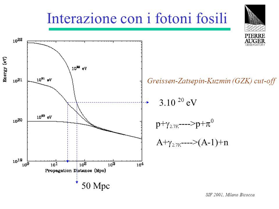 SIF 2001, Milano Bicocca Interazione con i fotoni fosili 3.10 20 eV 50 Mpc Greissen-Zatsepin-Kuzmin (GZK) cut-off p+   ---->p+   A+   ----