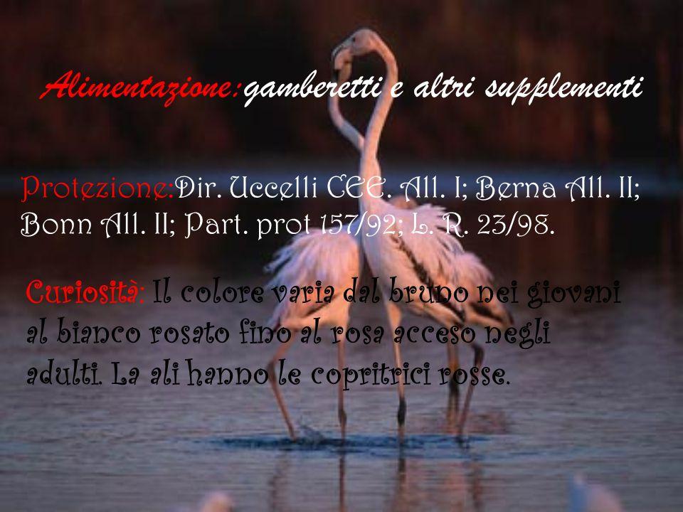 Alimentazione:gamberetti e altri supplementi Protezione:Dir. Uccelli CEE. All. I; Berna All. II; Bonn All. II; Part. prot 157/92; L. R. 23/98. Curiosi
