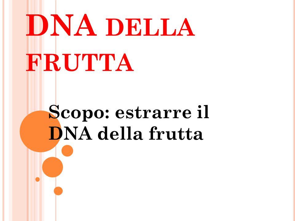 DNA DELLA FRUTTA Scopo: estrarre il DNA della frutta