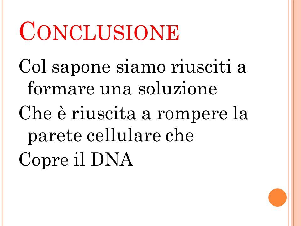 C ONCLUSIONE Col sapone siamo riusciti a formare una soluzione Che è riuscita a rompere la parete cellulare che Copre il DNA