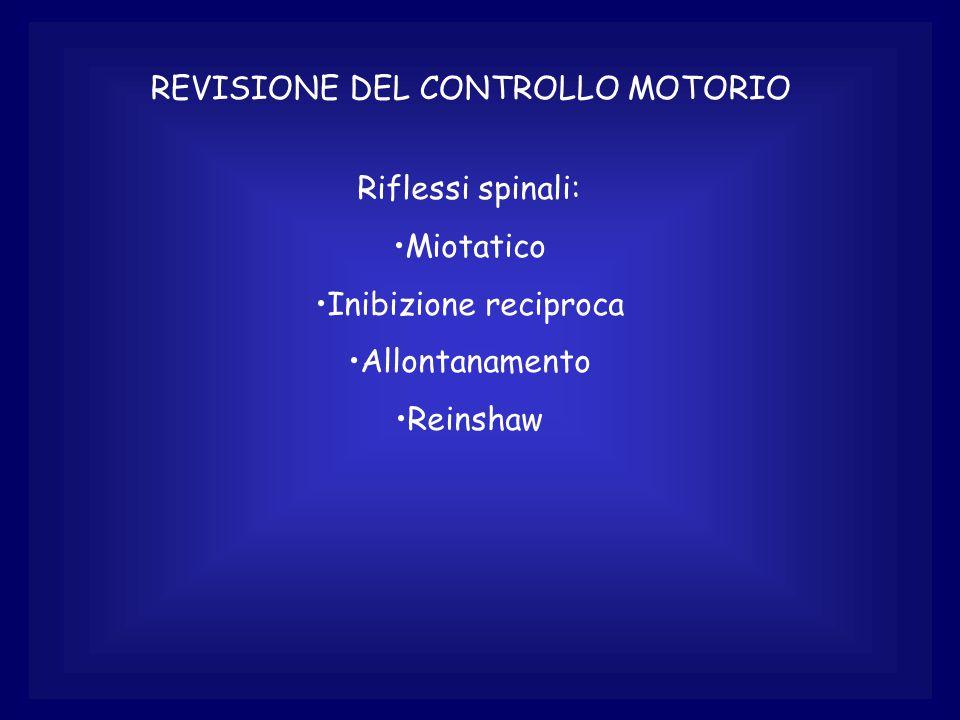 REVISIONE DEL CONTROLLO MOTORIO Riflessi spinali: Miotatico Inibizione reciproca Allontanamento Reinshaw