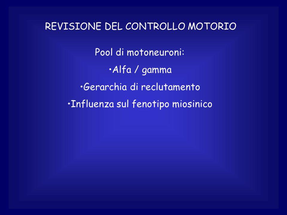 REVISIONE DEL CONTROLLO MOTORIO Pool di motoneuroni: Alfa / gamma Gerarchia di reclutamento Influenza sul fenotipo miosinico