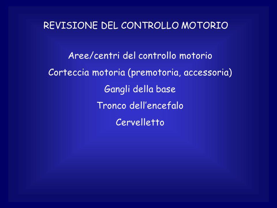 REVISIONE DEL CONTROLLO MOTORIO Aree/centri del controllo motorio Corteccia motoria (premotoria, accessoria) Gangli della base Tronco dell'encefalo Cervelletto