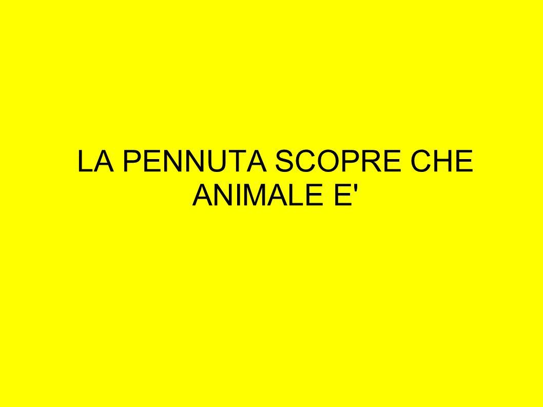 LA PENNUTA SCOPRE CHE ANIMALE E'
