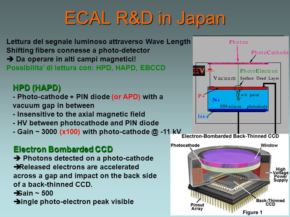ECAL R&D in Japan Lettura del segnale luminoso attraverso Wave Length Shifting fibers connesse a photo-detector  Da operare in alti campi magnetici.