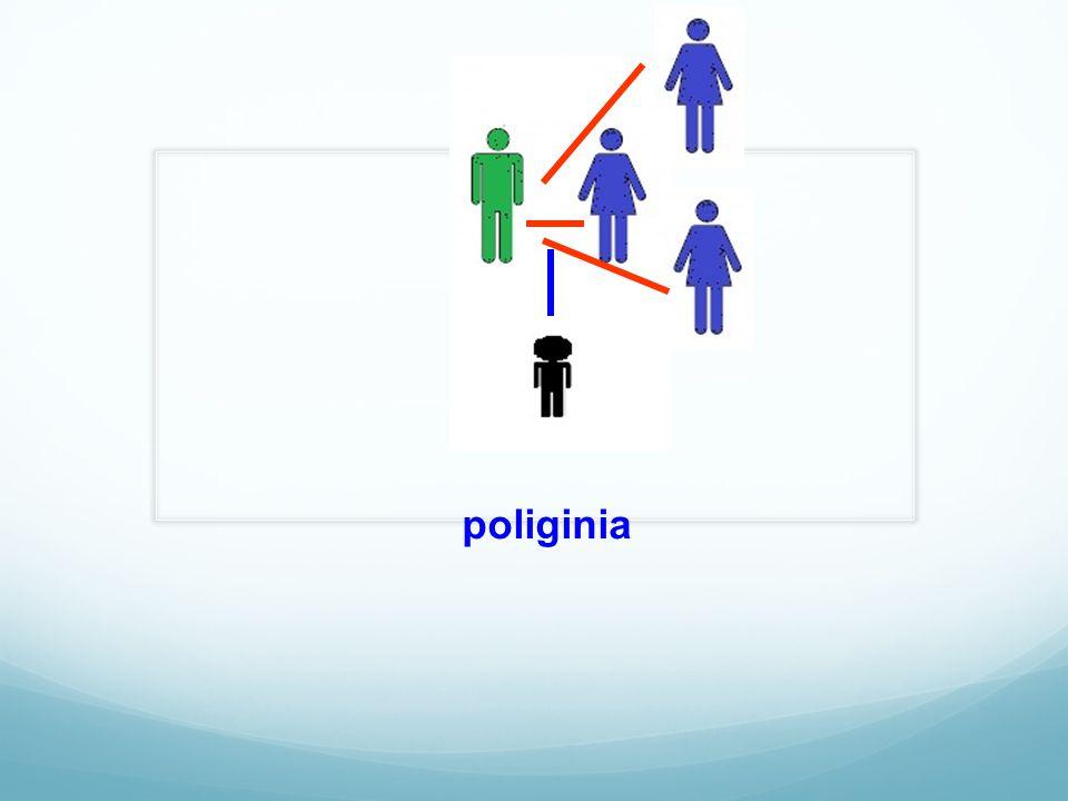 poliginia