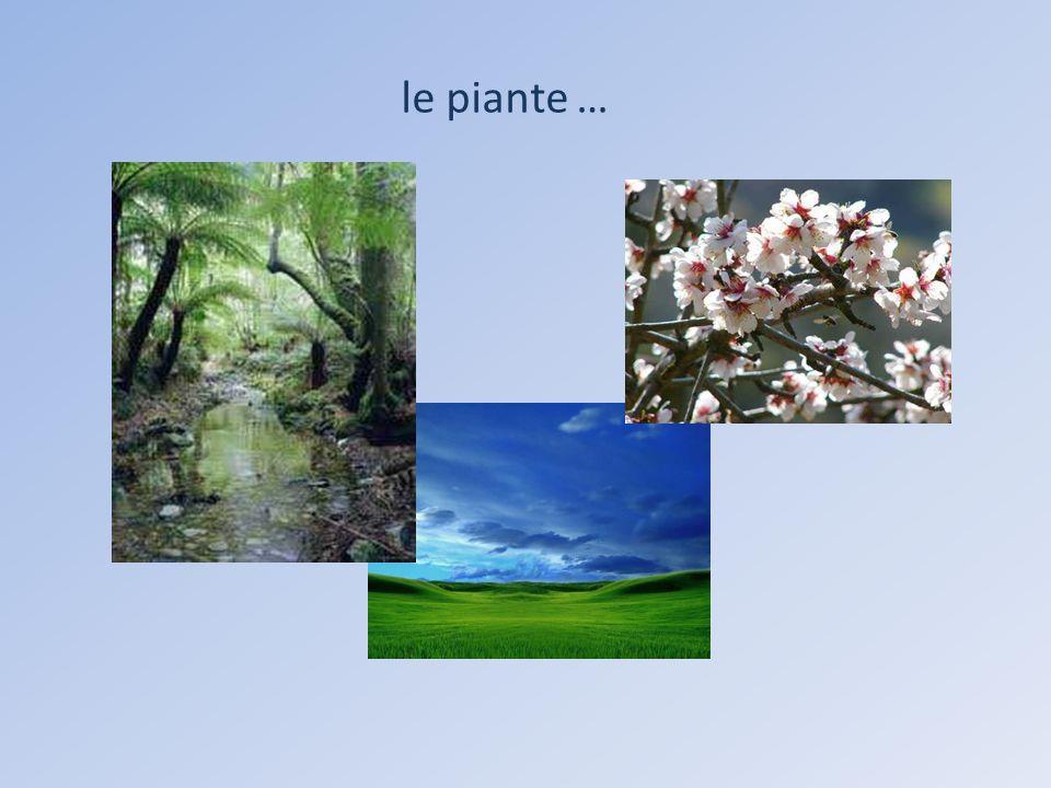le piante …