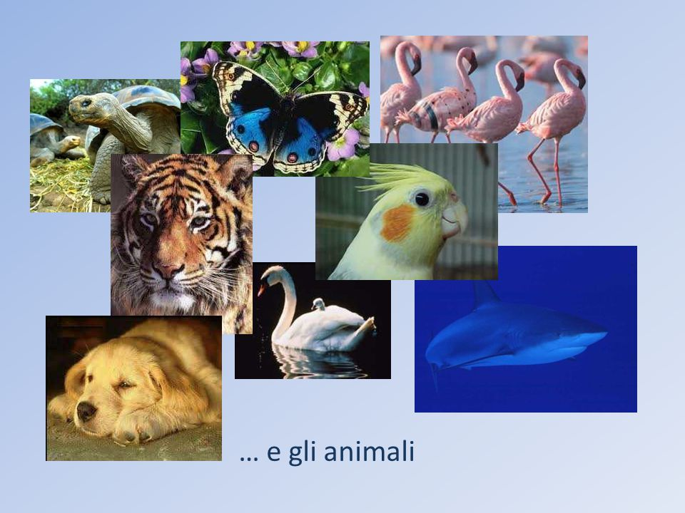 … e gli animali