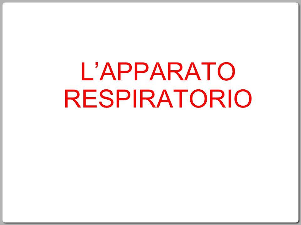 2 L'apparato respiratorio 1.Le funzioni generali della respirazione 2.Gli organi dell' apparato respiratorio superiore 3.Gli organi dell'apparato respiratorio inferiore 4.La ventilazione polmonare