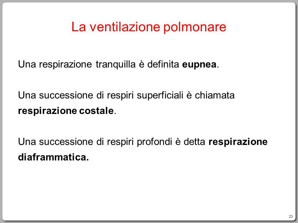 23 La ventilazione polmonare Una respirazione tranquilla è definita eupnea. Una successione di respiri superficiali è chiamata respirazione costale. U