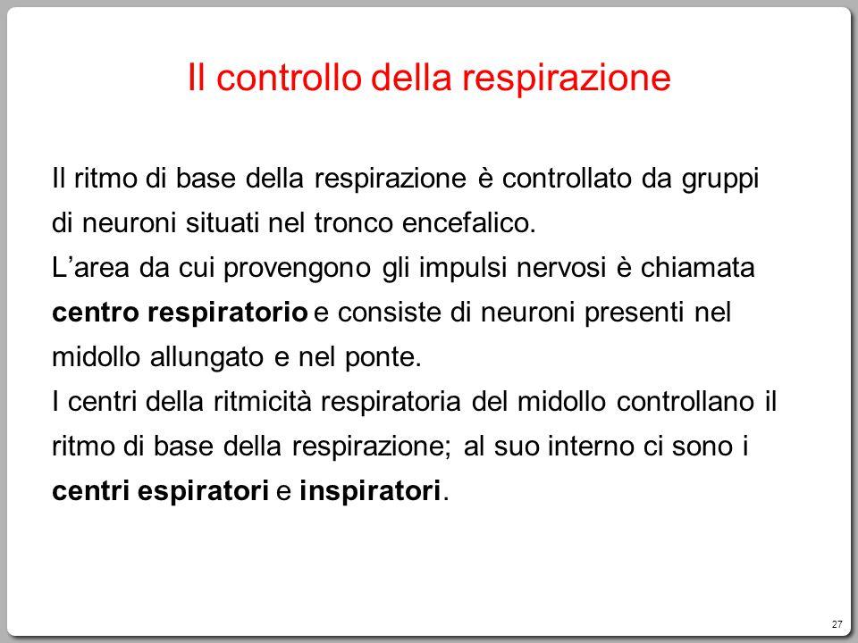 27 Il controllo della respirazione Il ritmo di base della respirazione è controllato da gruppi di neuroni situati nel tronco encefalico. L'area da cui
