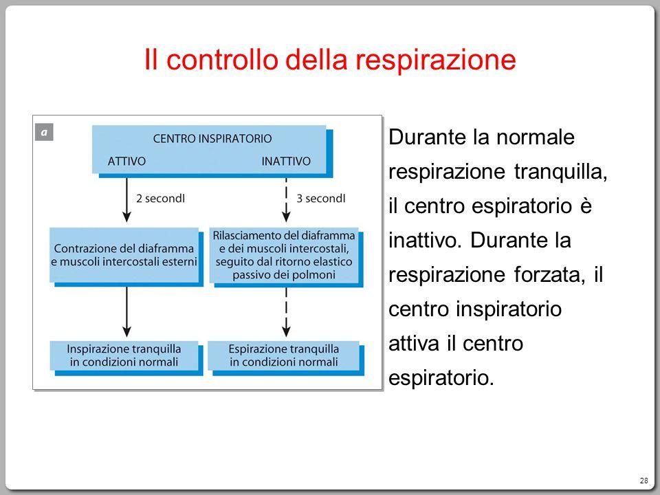 28 Il controllo della respirazione Durante la normale respirazione tranquilla, il centro espiratorio è inattivo. Durante la respirazione forzata, il c