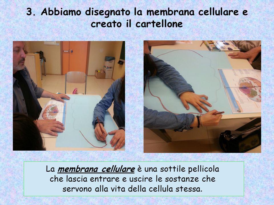 3. Abbiamo disegnato la membrana cellulare e creato il cartellone La membrana cellulare è una sottile pellicola che lascia entrare e uscire le sostanz