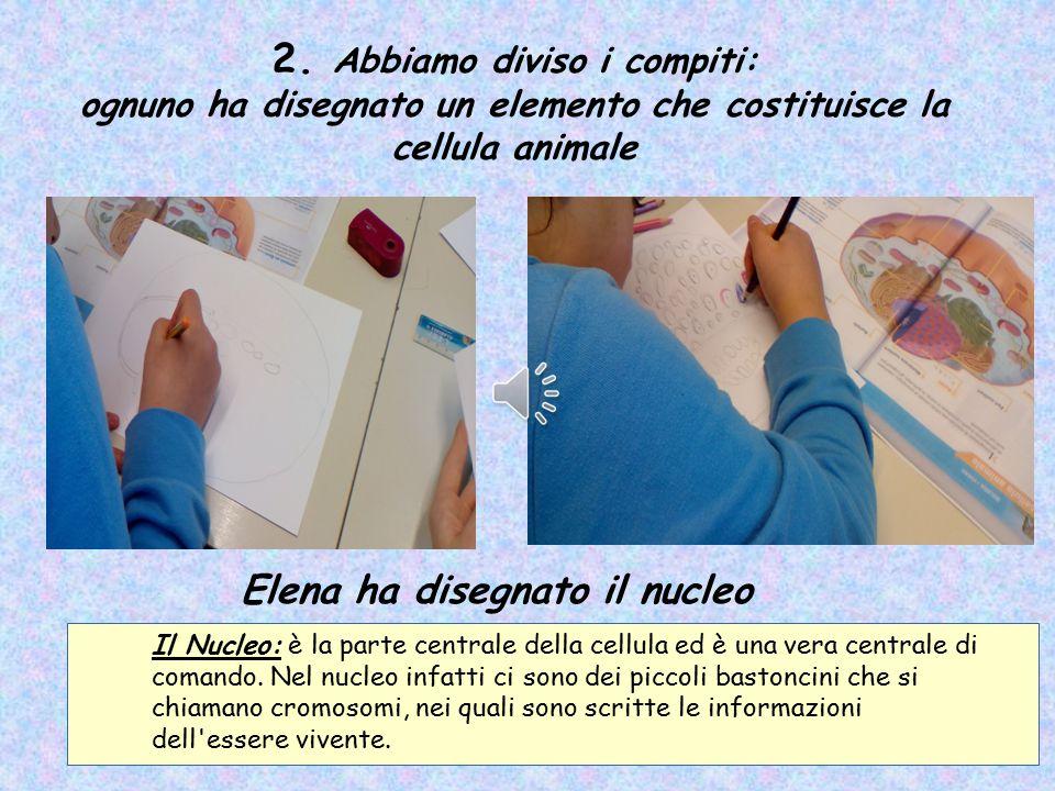 2. Abbiamo diviso i compiti: ognuno ha disegnato un elemento che costituisce la cellula animale Elena ha disegnato il nucleo Il Nucleo: è la parte cen