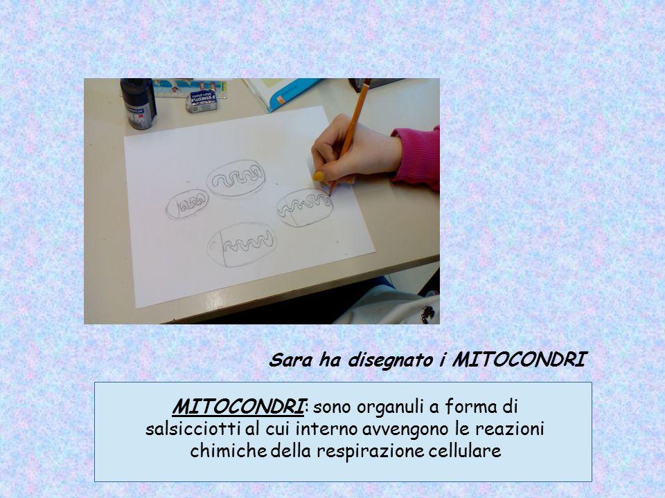 Sara ha disegnato i MITOCONDRI MITOCONDRI: sono organuli a forma di salsicciotti al cui interno avvengono le reazioni chimiche della respirazione cell