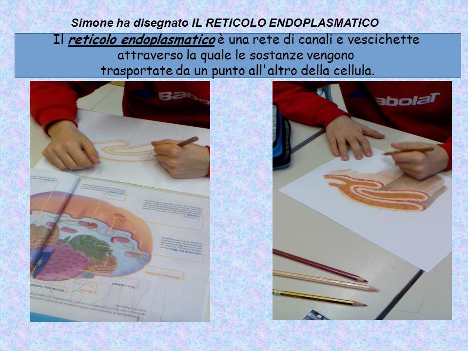Simone ha disegnato IL RETICOLO ENDOPLASMATICO Il reticolo endoplasmatico è una rete di canali e vescichette attraverso la quale le sostanze vengono t