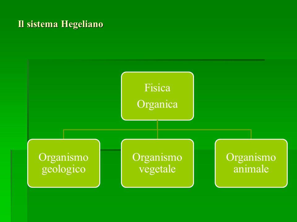Il sistema Hegeliano Fisica Organica Organismo geologico Organismo vegetale Organismo animale
