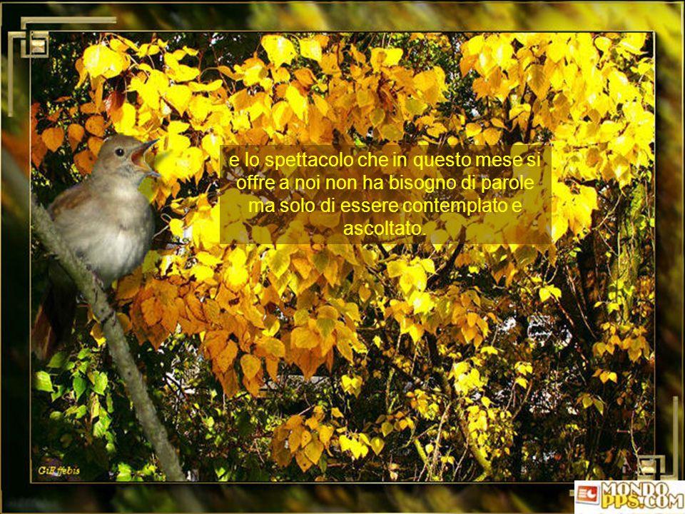 Tutto questo non deve ingenerare tristezza, perché la natura non conosce alcuna fine ma solo trasformazione e rigenerazione, in un perenne ciclo di ri