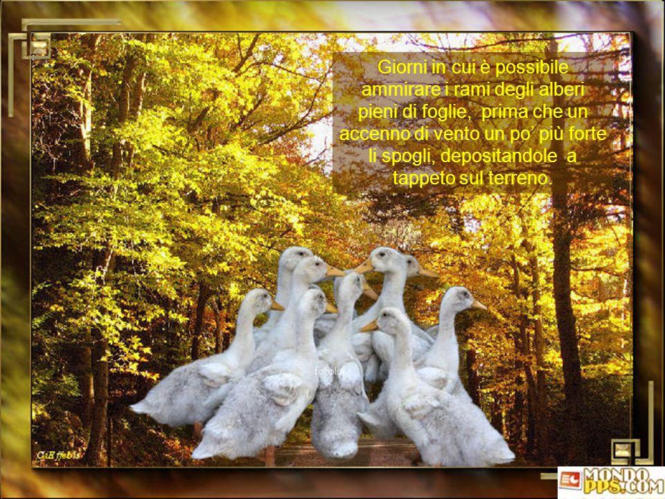 Giorni in cui è possibile ammirare i rami degli alberi pieni di foglie, prima che un accenno di vento un po' più forte li spogli, depositandole a tappeto sul terreno.