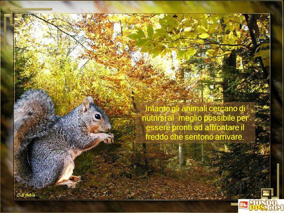 Giorni in cui è possibile ammirare i rami degli alberi pieni di foglie, prima che un accenno di vento un po' più forte li spogli, depositandole a tapp
