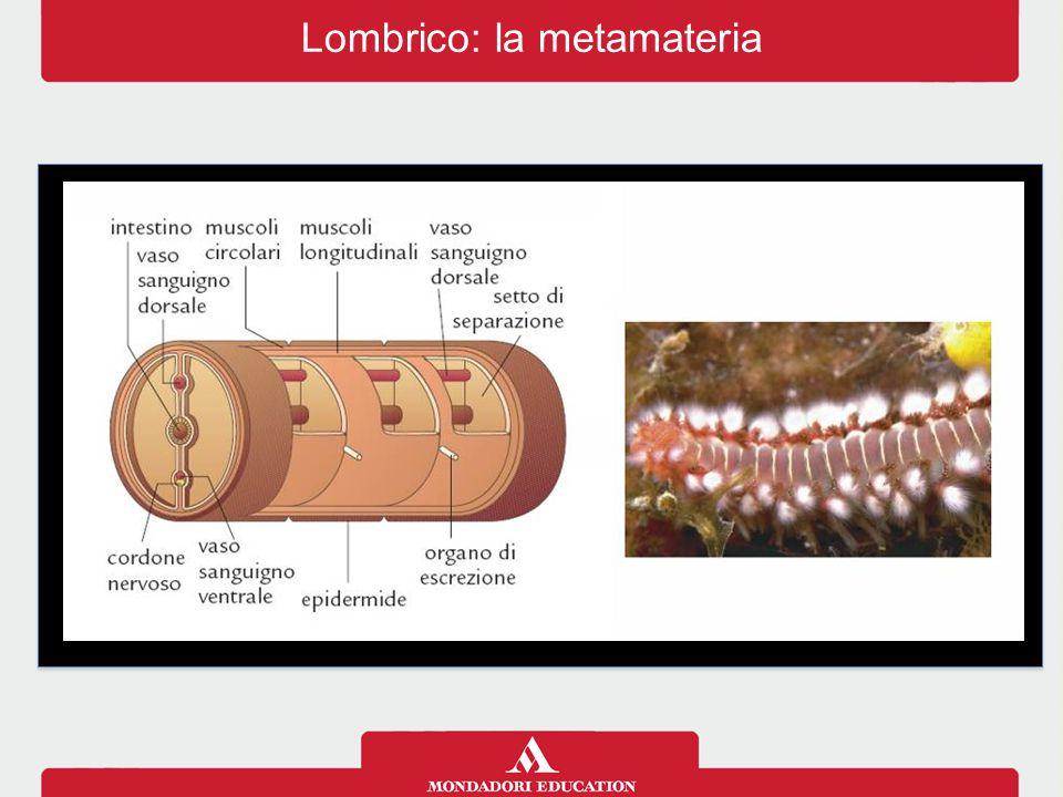 Lombrico: la metamateria