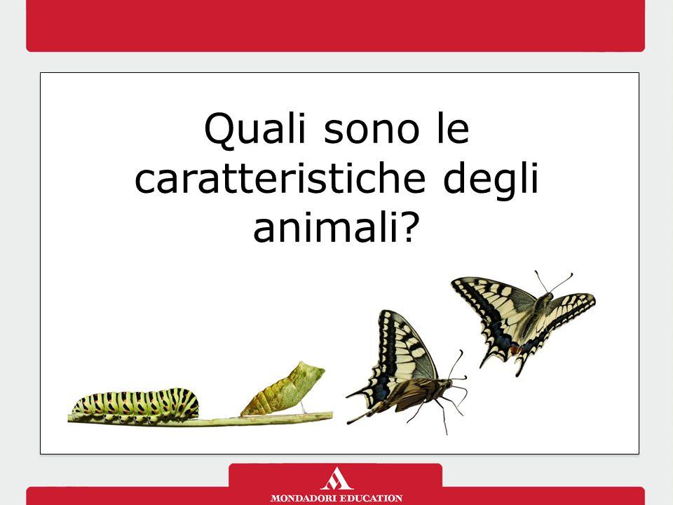 Quali sono le caratteristiche degli animali?