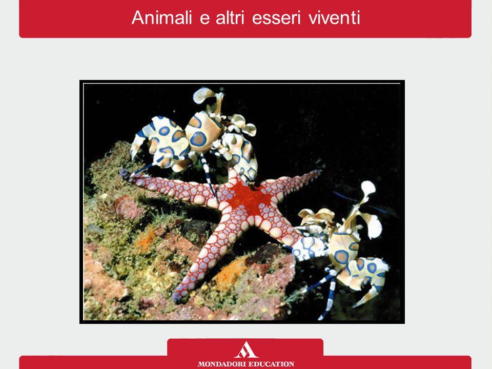 Animali e altri esseri viventi