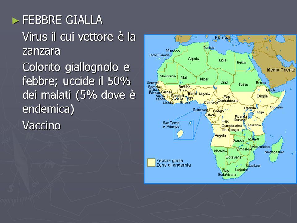 ► FEBBRE GIALLA Virus il cui vettore è la zanzara Colorito giallognolo e febbre; uccide il 50% dei malati (5% dove è endemica) Vaccino