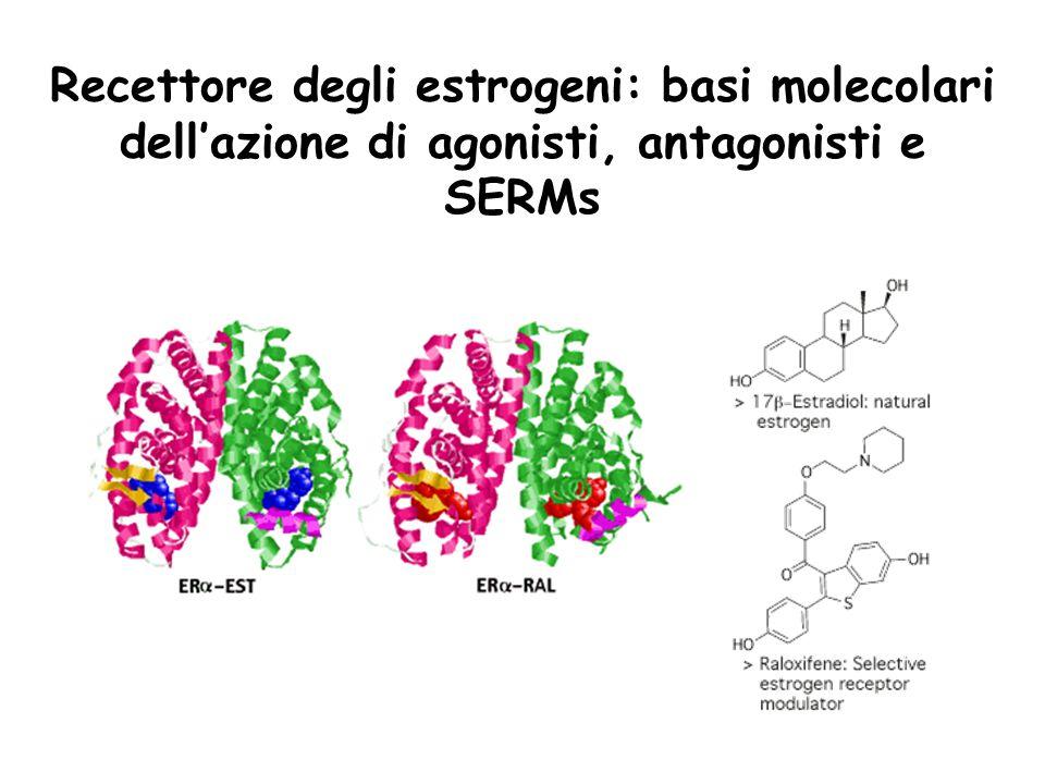 Recettore degli estrogeni: basi molecolari dell'azione di agonisti, antagonisti e SERMs