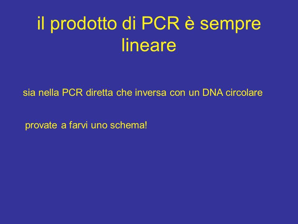il prodotto di PCR è sempre lineare sia nella PCR diretta che inversa con un DNA circolare provate a farvi uno schema!