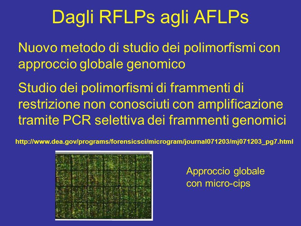 Dagli RFLPs agli AFLPs Nuovo metodo di studio dei polimorfismi con approccio globale genomico Studio dei polimorfismi di frammenti di restrizione non conosciuti con amplificazione tramite PCR selettiva dei frammenti genomici http://www.dea.gov/programs/forensicsci/microgram/journal071203/mj071203_pg7.html Approccio globale con micro-cips