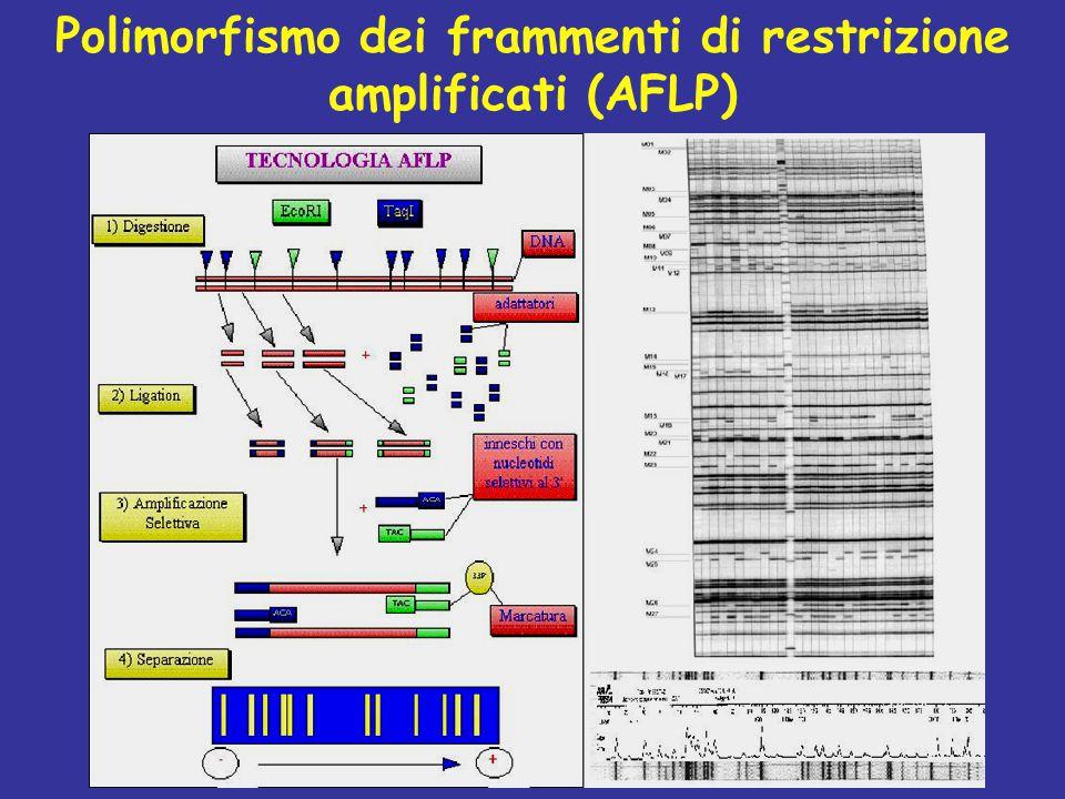 Polimorfismo dei frammenti di restrizione amplificati (AFLP)