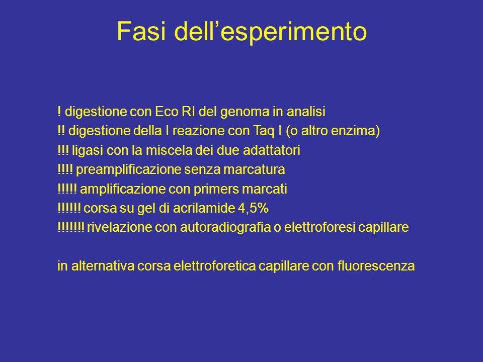 Fasi dell'esperimento ! digestione con Eco RI del genoma in analisi !! digestione della I reazione con Taq I (o altro enzima) !!! ligasi con la miscel