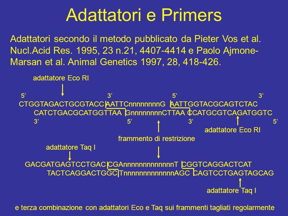 Adattatori e Primers Adattatori secondo il metodo pubblicato da Pieter Vos et al. Nucl.Acid Res. 1995, 23 n.21, 4407-4414 e Paolo Ajmone- Marsan et al