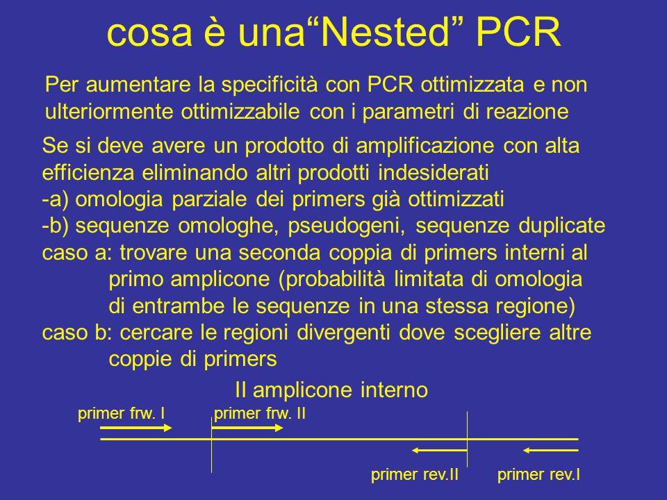 cosa è una Nested PCR Per aumentare la specificità con PCR ottimizzata e non ulteriormente ottimizzabile con i parametri di reazione Se si deve avere un prodotto di amplificazione con alta efficienza eliminando altri prodotti indesiderati -a) omologia parziale dei primers già ottimizzati -b) sequenze omologhe, pseudogeni, sequenze duplicate caso a: trovare una seconda coppia di primers interni al primo amplicone (probabilità limitata di omologia di entrambe le sequenze in una stessa regione) caso b: cercare le regioni divergenti dove scegliere altre coppie di primers primer frw.