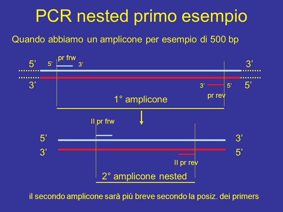 PCR nested primo esempio Quando abbiamo un amplicone per esempio di 500 bp 5' 3'5' 3' pr frw pr rev 5' 3' 1° amplicone 5' 3' II pr frw II pr rev 2° amplicone nested il secondo amplicone sarà più breve secondo la posiz.