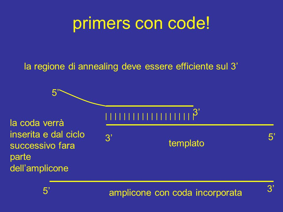primers con code! la regione di annealing deve essere efficiente sul 3' templato 3' 5' 3' la coda verrà inserita e dal ciclo successivo fara parte del