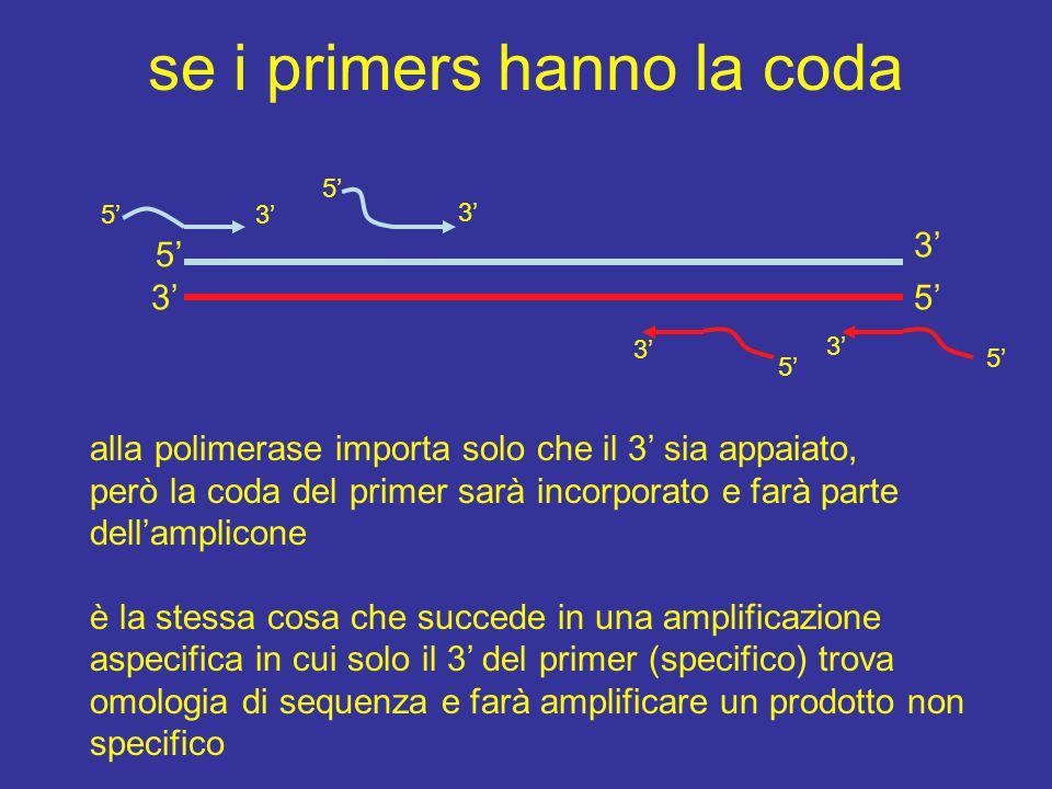 se i primers hanno la coda 5'3' 5' 3' 5' 3' alla polimerase importa solo che il 3' sia appaiato, però la coda del primer sarà incorporato e farà parte